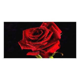Beautiful red rose card