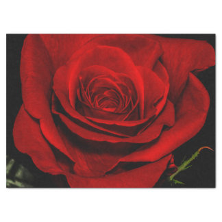 Beautiful Red Rose Flower Floral Photo Tissue Paper
