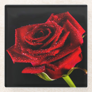 Beautiful red rose glass coaster