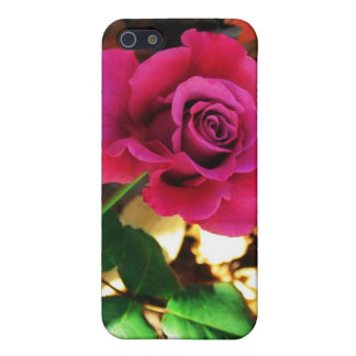 Beautiful Red Rose iPhone Case