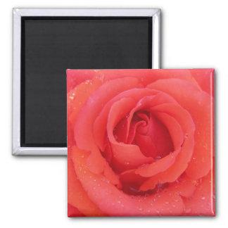 Beautiful  Red Rose Magnet