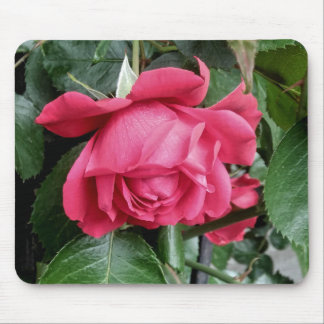 Beautiful Red Rose Mouse Pad