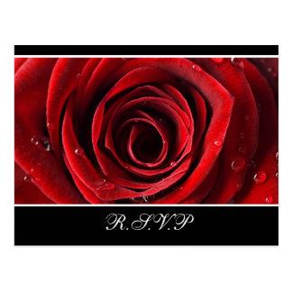 Beautiful Red Rose Wedding RSVP -Black Postcard