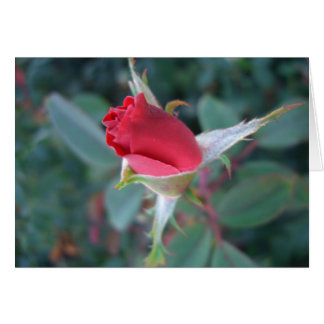 Beautiful Red Rosebud CricketDiane Roses Card