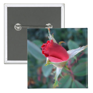 Beautiful Red Rosebud CricketDiane Roses Pinback Button