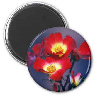 Beautiful red roses and meaning magnet