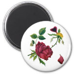Beautiful Red Roses Done in Crewel Embroidery Magnets