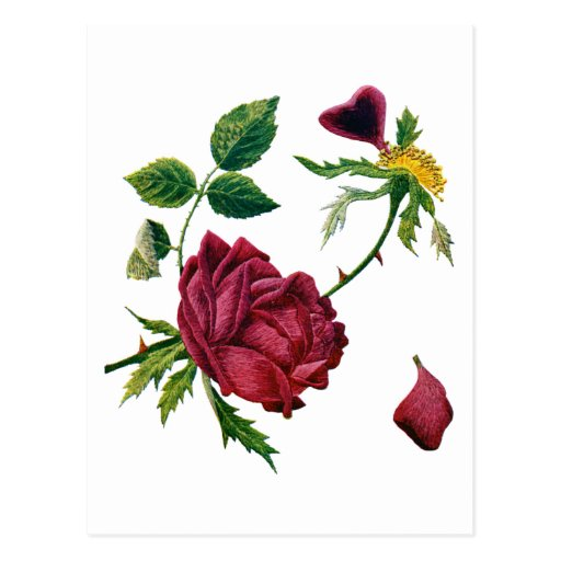 Beautiful Red Roses Done in Crewel Embroidery Postcard