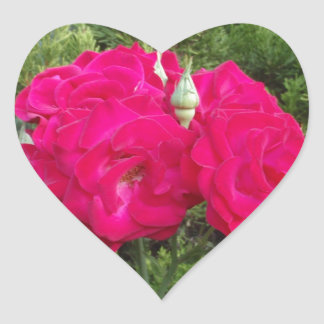 Beautiful Red Roses Heart Sticker