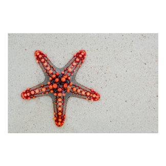 Beautiful red starfish in sand poster