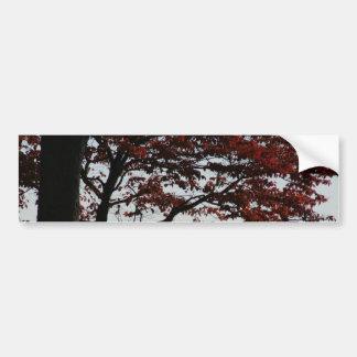 Beautiful Red Tree Autumn Photo Bumper Stickers