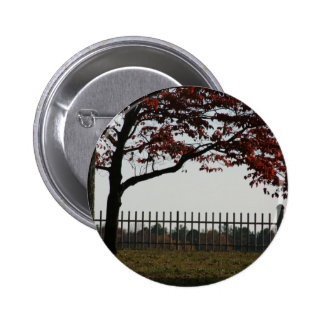 Beautiful Red Tree Autumn Photo Pinback Buttons