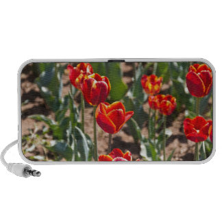 Beautiful red tulip flowers with yellow tips iPod speakers