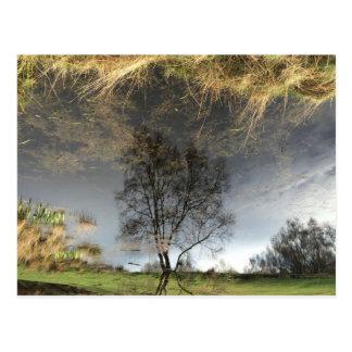 Beautiful Reflection Photography Tree Postcard
