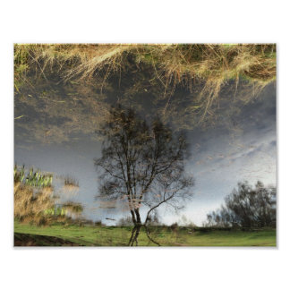 Beautiful Reflection Photography Tree Poster