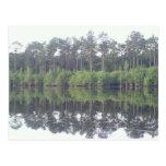 Beautiful reflective image of lake in Georgia Postcard