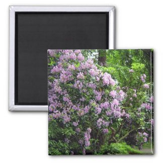 Beautiful Rhododendrons 2 Inch Square Magnet