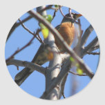 Beautiful Robin in the Tree Sticker