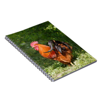 Beautiful Rooster Spiral Notebook
