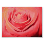 Beautiful Rose Canvas Poster