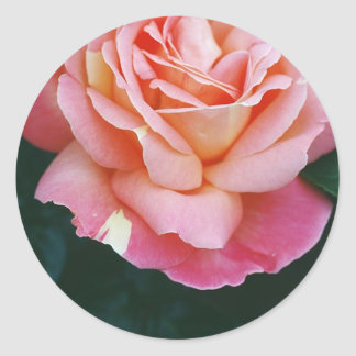 Beautiful Rose Classic Round Sticker