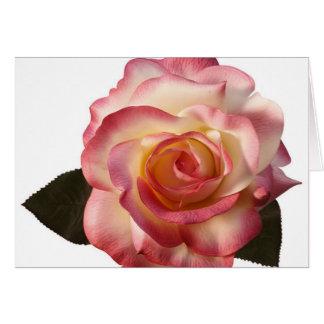 Beautiful Rose Greeting Card. Card