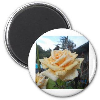Beautiful Rose Magnet