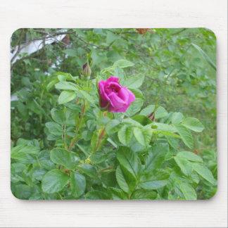Beautiful  Rose Mouse Pad