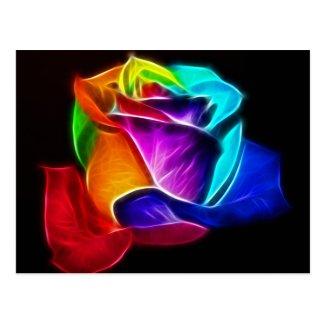 Beautiful Rose of Colors 5 Postcard