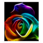 Beautiful Rose of Colors No3 Poster