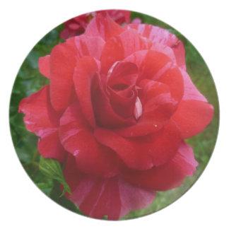 Beautiful rose plate