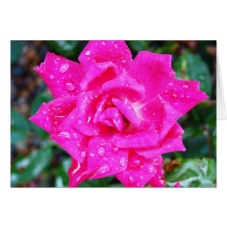 Beautiful rose with raindrops card