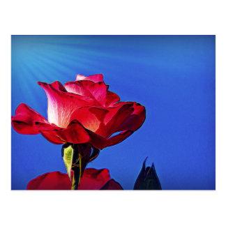 Beautiful rose with sunshine, on a postcard