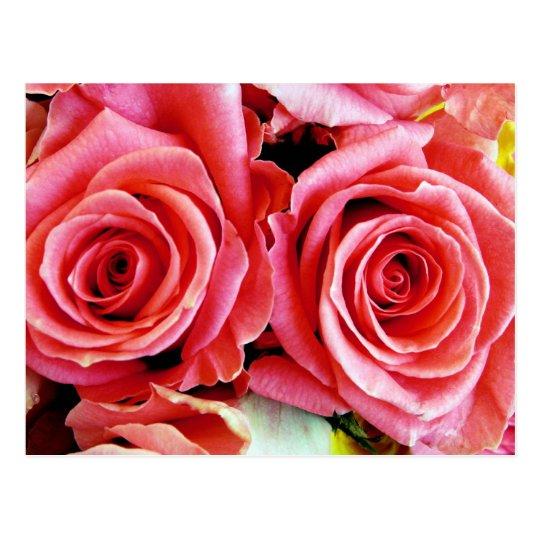 Beautiful Roses Postcard