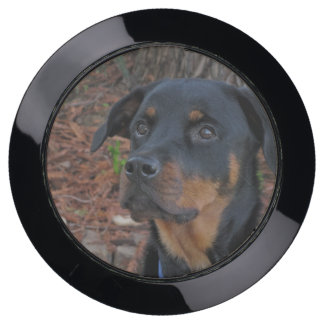 Beautiful Rottweiler ChargeHub