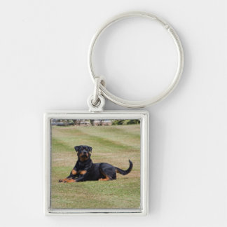 Beautiful Rottweiler dog keychain, gift idea Keychain