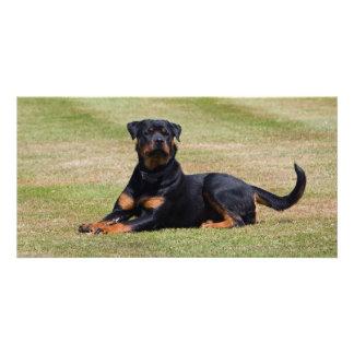 Beautiful Rottweiler dog photo card, gift idea Photo Card