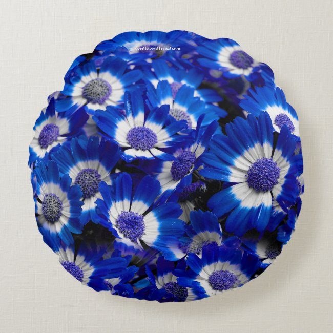 Beautiful Royal Blue Cineraria Flowers