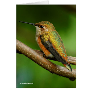 Beautiful Rufous Hummingbird on Twining Vines Card