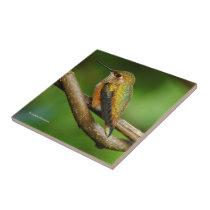 Beautiful Rufous Hummingbird on Twining Vines Tile