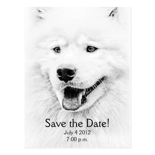 Beautiful Samoyed dog art Postcard