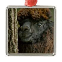 Beautiful Savannah The Suri Alpaca 2 Metal Ornament