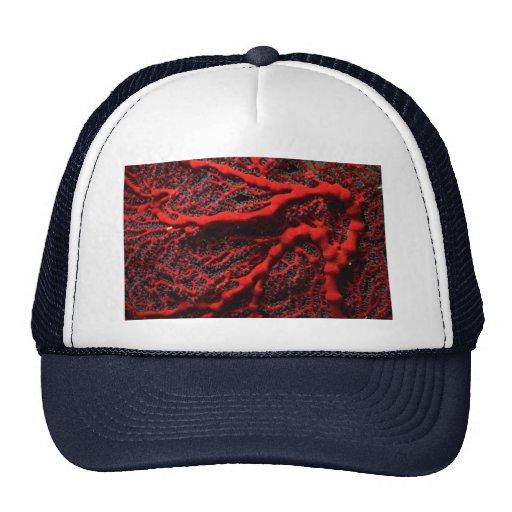 Beautiful Scarlet sea fan harboring numerous small Trucker Hat