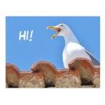 Beautiful Seagull - Hello Postcard