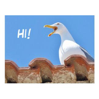 Beautiful Seagull - Hello Postcard