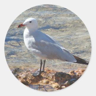 Beautiful seagull - Sticker