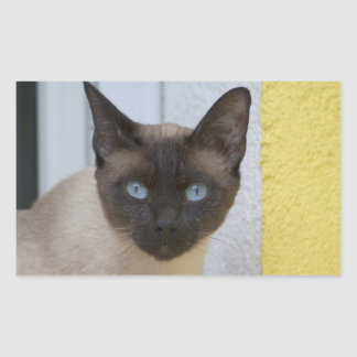Beautiful Seal Point Siamese Cat