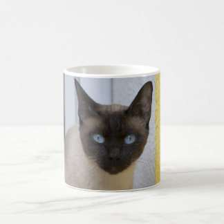 Beautiful Seal Point Siamese Cat Coffee Mug