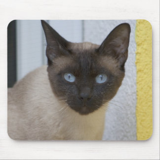 Beautiful Seal Point Siamese Cat Mouse Pad