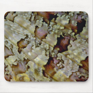 Beautiful Section of a scorpion fish's pectoral fi Mousepads